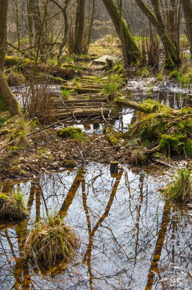 Wald Steg See