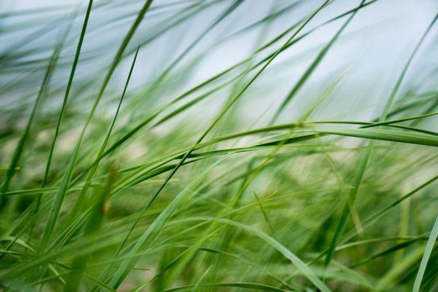 Poel Strand Gras Wind