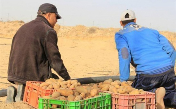 قروض المشاريع الانتاجية تسهم بتحسين اوضاع الأسر الفقيرة بالمزار الجنوبي