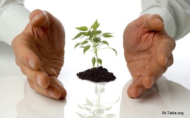 www-St-Takla-org___Plants-Growth-01