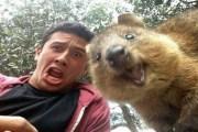 'السيلفي' تهدد حياة الحيوانات البرية