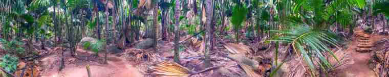 Vallee de Mai Natural Reserve, Praslin panoramic view of palm forest, Seychelles.