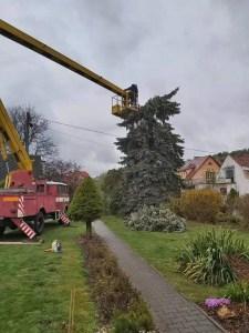 Ořez stromů 2