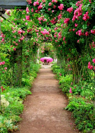 Rose-covered garden path, Image by The Tromp Queen, CC license