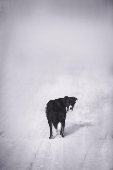 Pet photography boise idaho-1