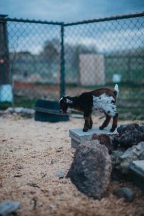 Los Angeles Lifestyle Photographer Idaho Farm Candids (18)