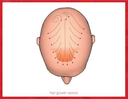 hair-growth-vectors
