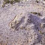 wuquf di arofah - Perbedaan Haji dan Umroh