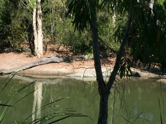 Spot the croc at Hartleys Port Douglas