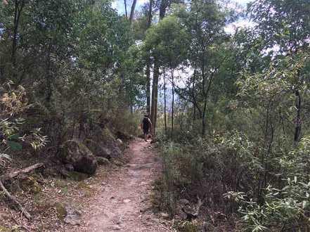 Eurobin Falls Trail David