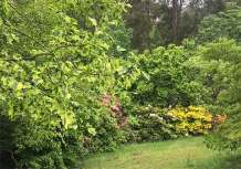 Dandenong Ranges Botanic Garden