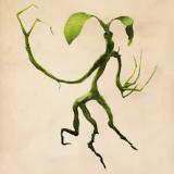 [ファンタビ]枝の魔法動物がかわいいと話題!名前やグッズの販売は?
