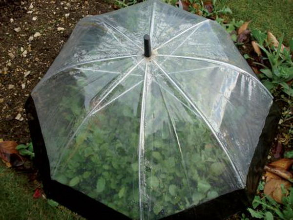 Umbrella Outdoor Table