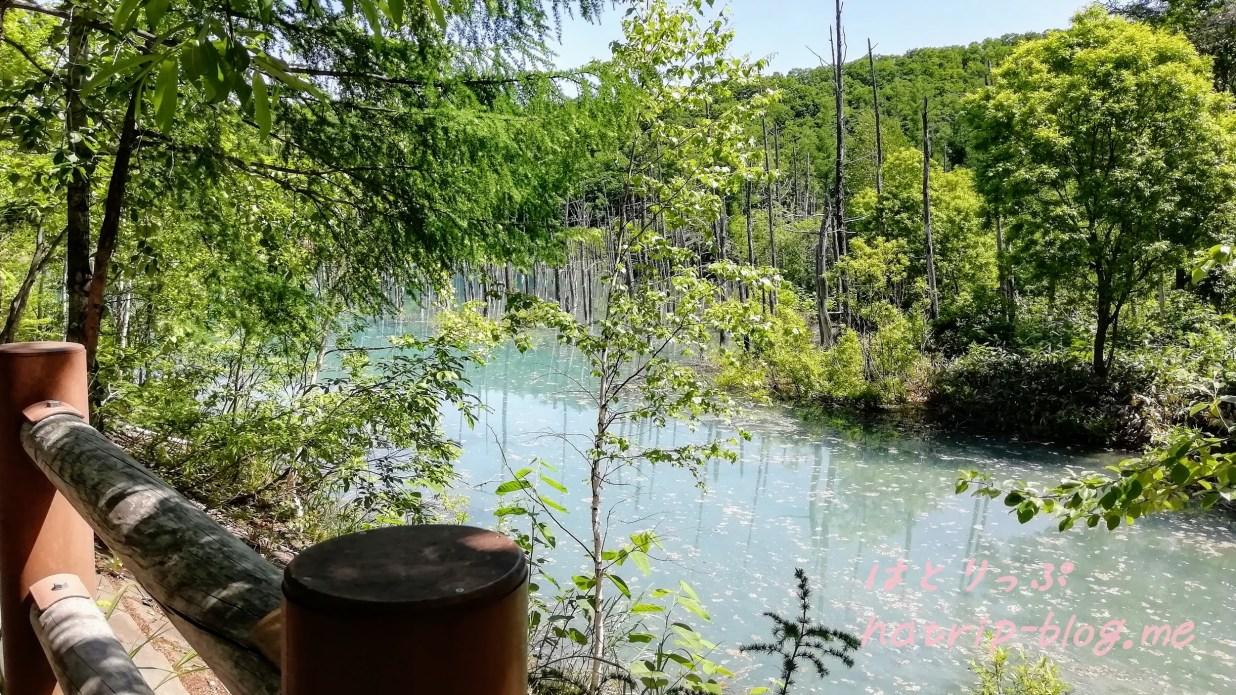 北海道 美瑛町 白金青い池