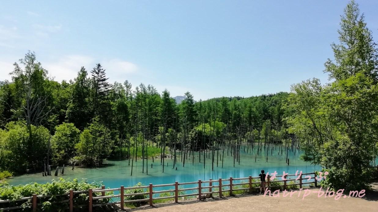 北海道 美瑛町 白金青い池 高台