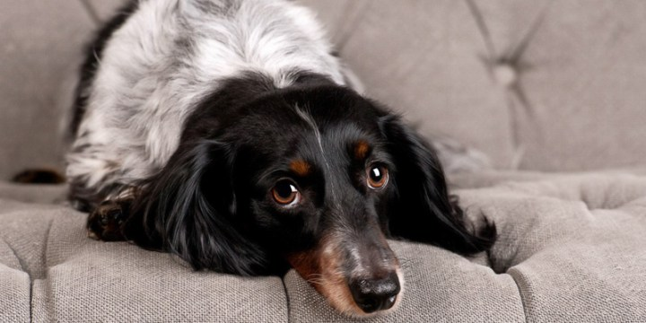 Tips for a Stress-Free Pet Portrait Session