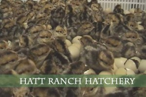 Hatt Ranch Hatchery