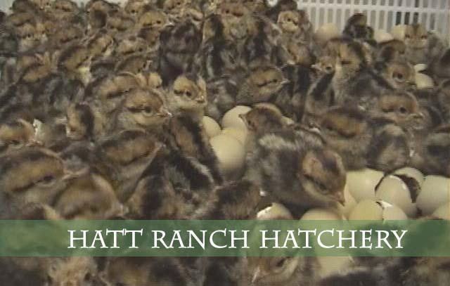 hattRanchHatchery1
