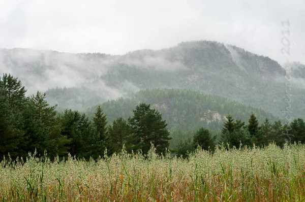 des collines dans la brume, Nedre Moen