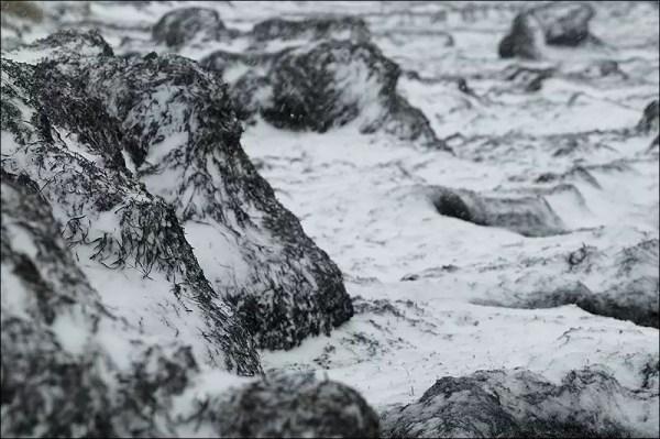 la zostère s'amoncele sur la plage