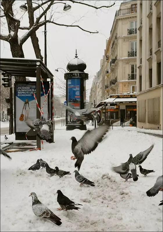 les pigeons sont impavides comme d'hab ;-)