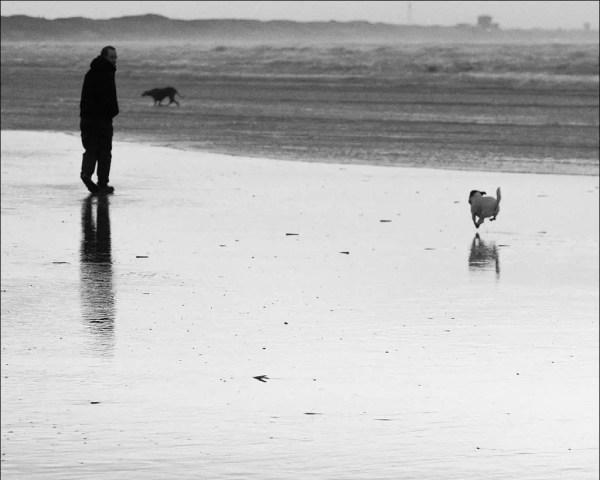 se promener avec le chien