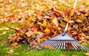 fall home cleaning