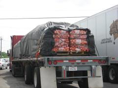 Shipping Updates: Onions Nationwide; Western Vegetables; and Florida Blueberries