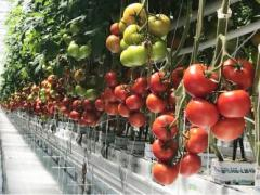 Mucci Opens Phase 1 of Greenhouse Operation in Huron, Ohio