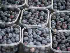 Argentina Blueberry Imports by U.S. Should be Lower as Competition Increases
