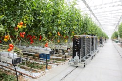 Loadings from Ontario Greenhouses are Picking Up