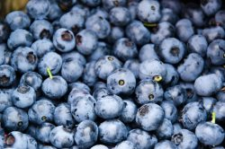 Crystal Valley Partners with Superior Berries on Georgia Blueberries
