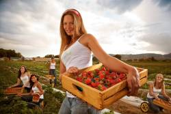 California Strawberry Commission Issues an Open Letter