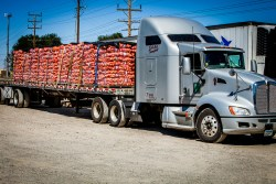 Georgia Vegetable Shipments to be Cut by Weather Issues