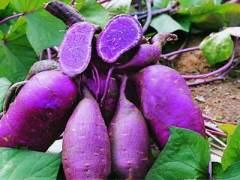 Unique Varieties Gain Popularity with Organic Sweet Potatoes