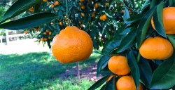 U.S. Citrus Imports Soared in 3Q While Avocados Plunged