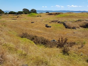 Otuataua Stonefields High EMF area