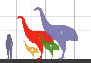 800px-Dinornithidae_SIZE_01