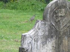 Clevedon Parish Cemetery 02