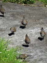 Birkenhead/Glenfield Cemetery birds