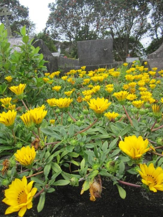 Hillsborough Cemetery 13