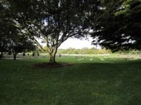 Maunu Cemetery 14