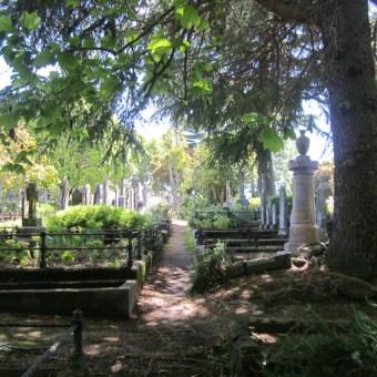 Old Napier Cemetery 17