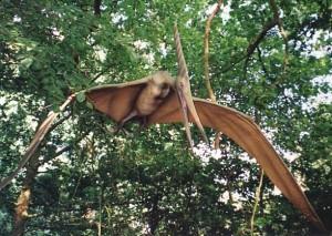 Pteranodon in flight, Dr Karl Shuker