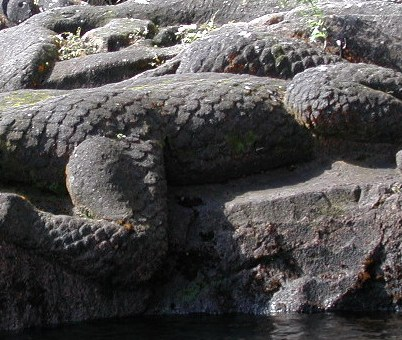 The Taniwha