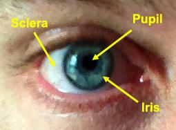 eye-diagram-copy