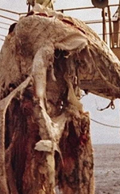 The Zuiyo-maru carcass