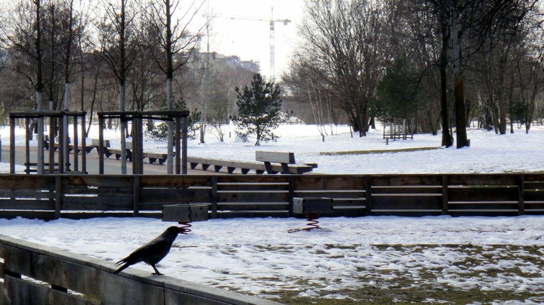 Winter Berlin Park am Gleisdreieck