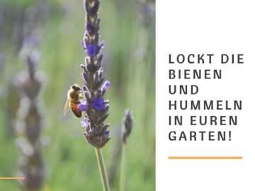 Locke Bienen und Hummeln in deinen Garten