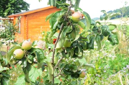 juli apfelbaum